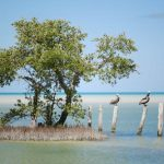 Isla Holbox Blog Yucatan