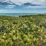 Isla Contoy Blog Yucatan Solidaire