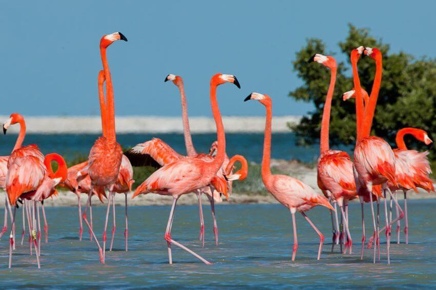 Rio Lagartos Blog Yucatan Solidaire 850x565