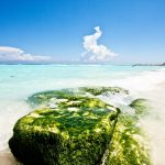 Tout sur Cancun Péninsule Yucatan Solidaire