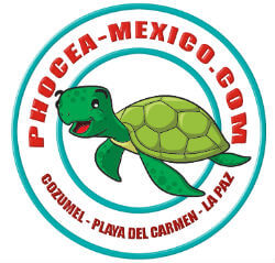 Phocea Mexico Yucatan Solidaire